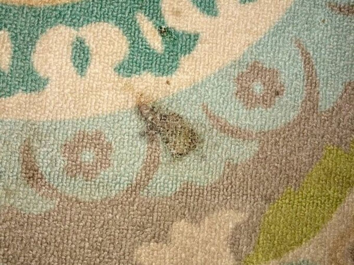 A mild scorched rug can be lightly buffed to use a very fine grit sandpaper.