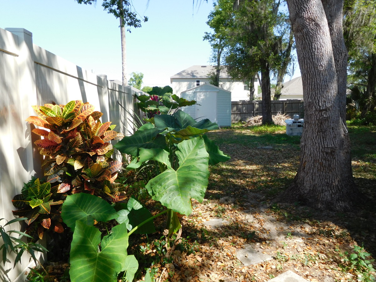 Crotons can handle the heat