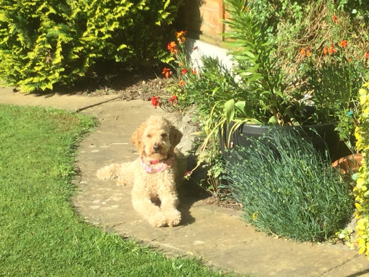 Florrie and her perennial 'pinks'.