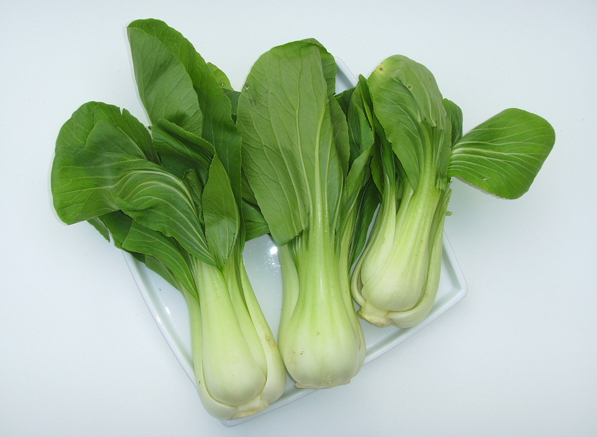Pak choy is a fast-growing vegetable!