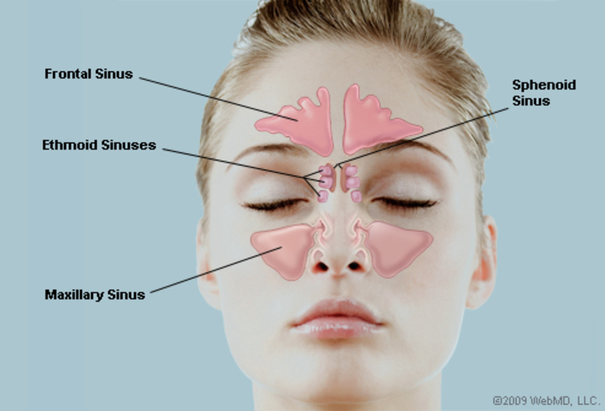 The sinus areas.