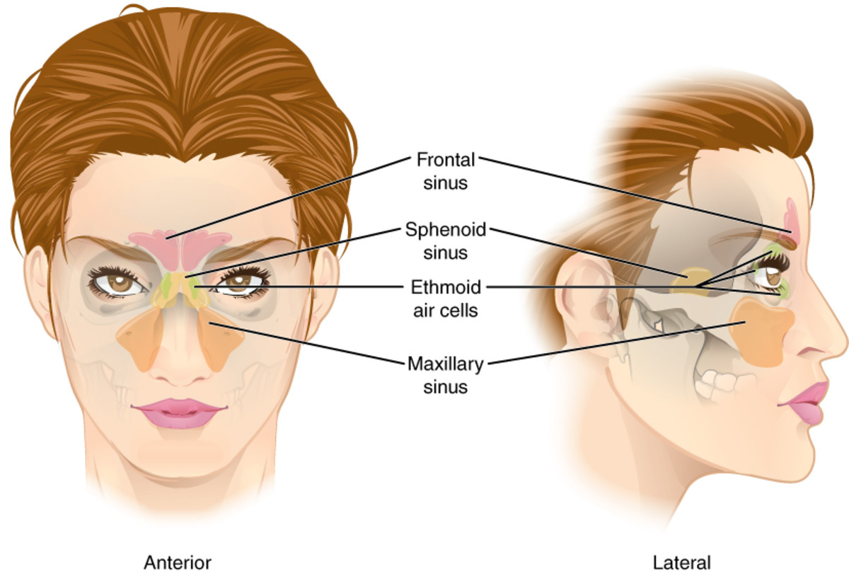 steroids used for sinus infections