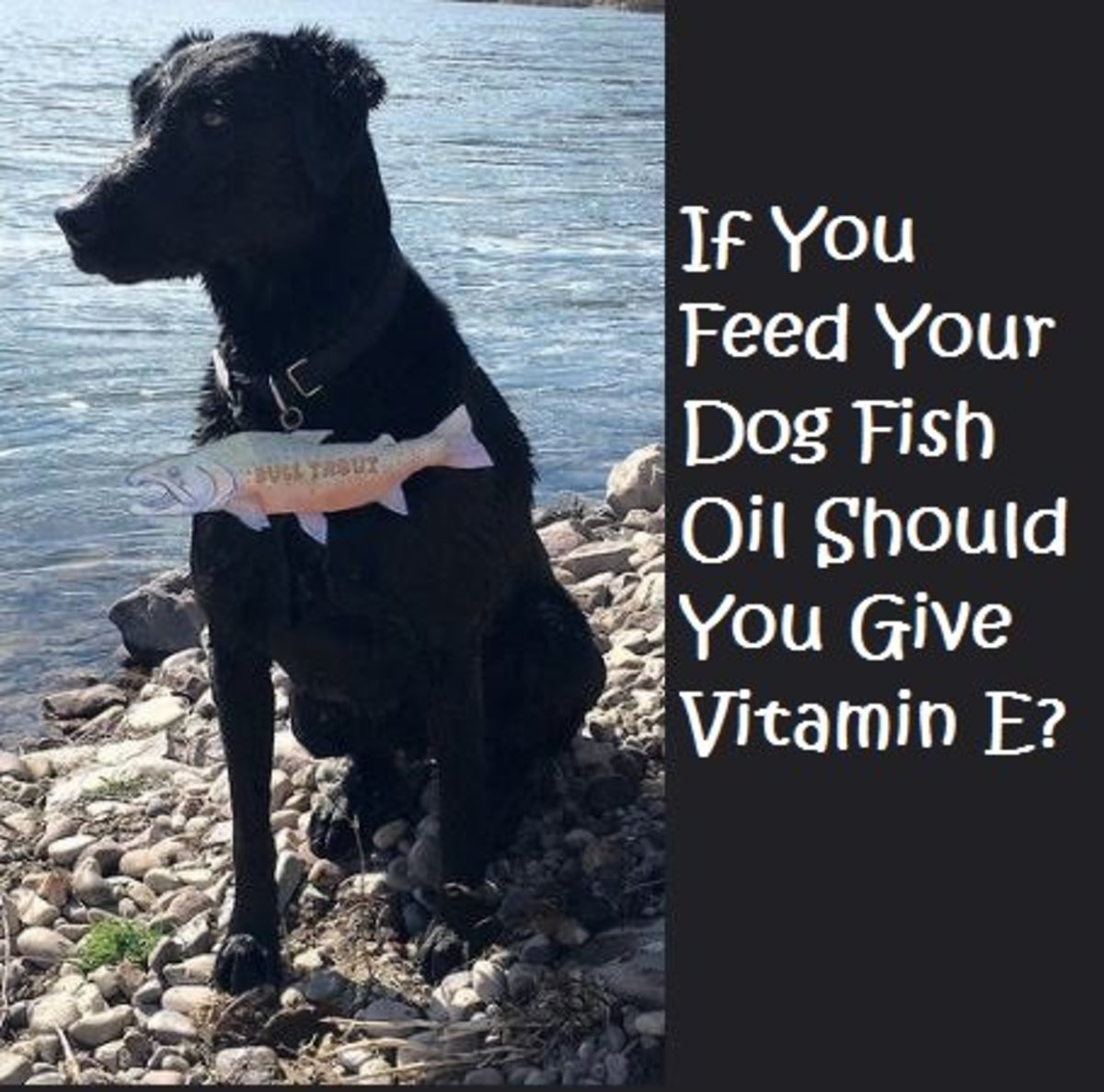 If You Feed Your Dog Fish Oil, Should You Also Give Vitamin E?