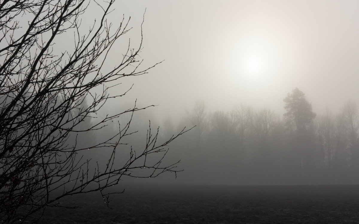 The Fable of the Boy and the Fog
