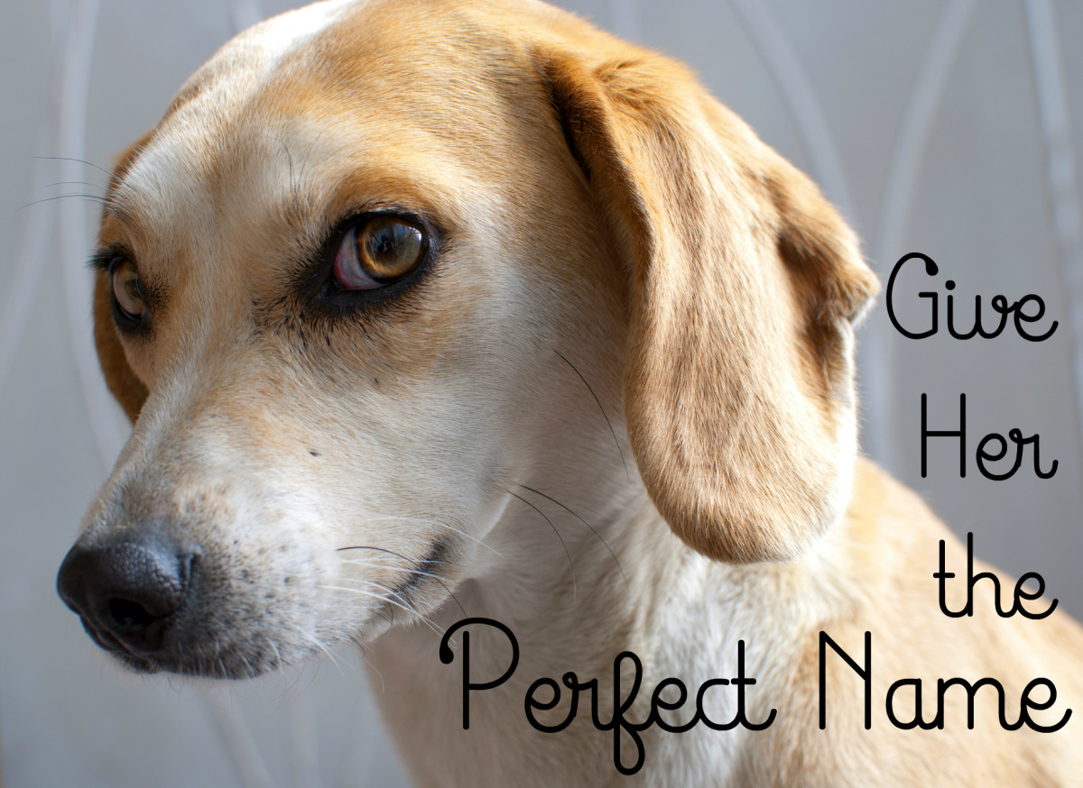 100+ Cute Female Dog Names and Meanings