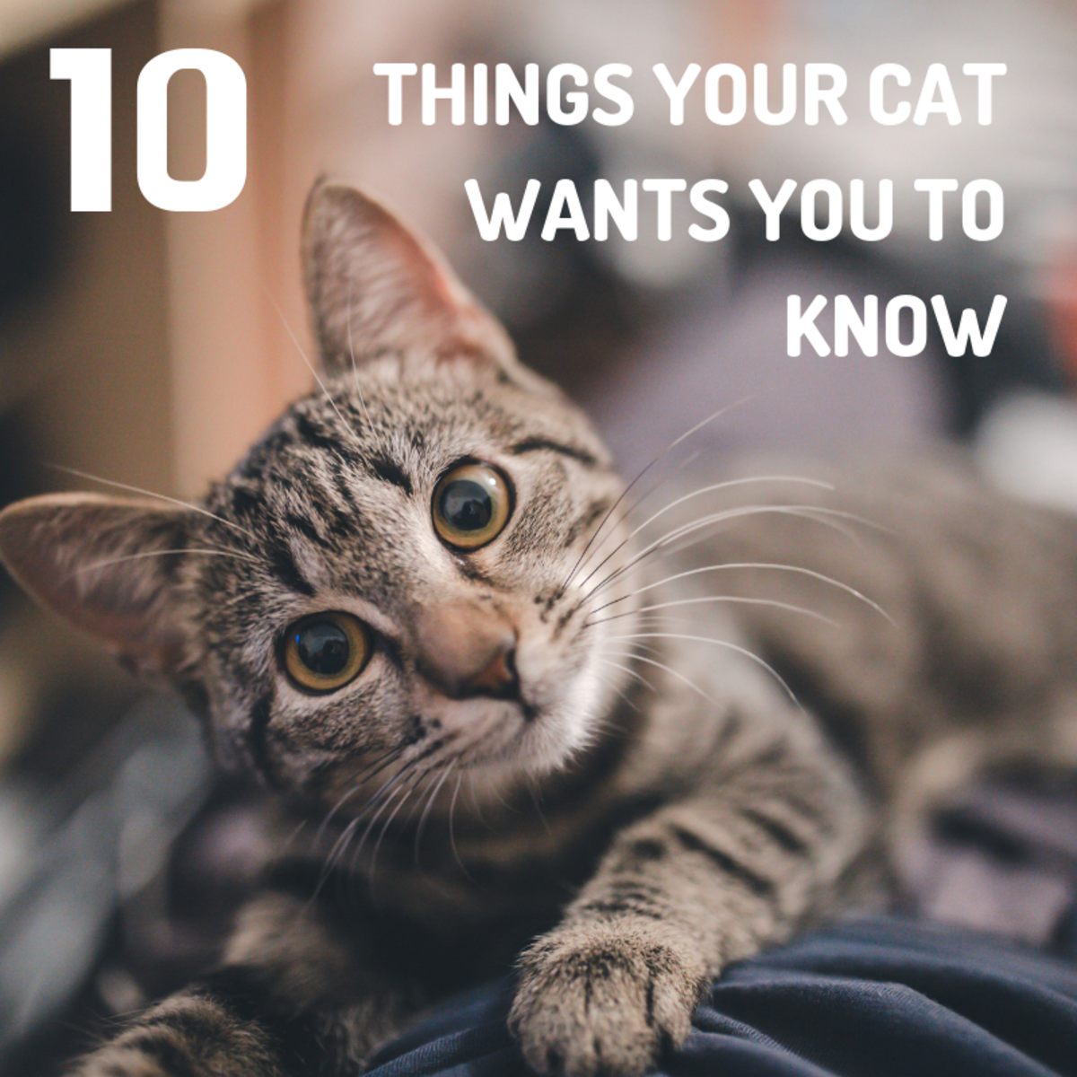 Top 10 Things Your Cat Wishes You Knew