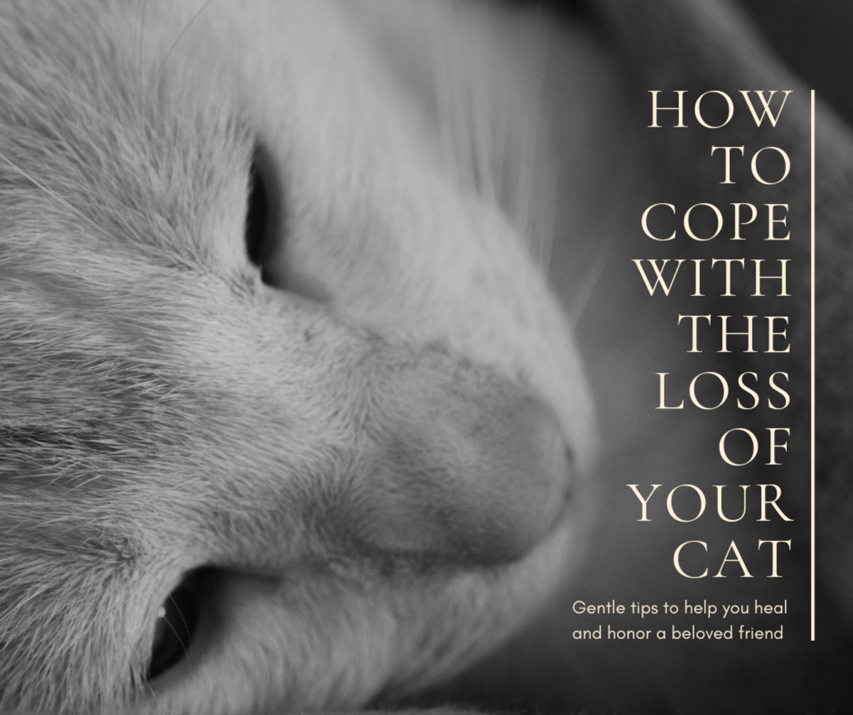 Coping with the loss of a beloved cat can be truly devastating, but hopefully this article can help guide you through your grieving process.