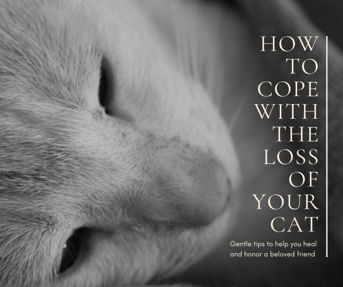 When Your Cat Dies: Gentle Tips to Heal Your Grieving Heart