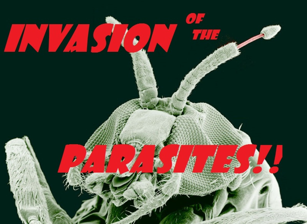 Parasites are creatures that live and feed in and on other creatures. The real alien invaders!