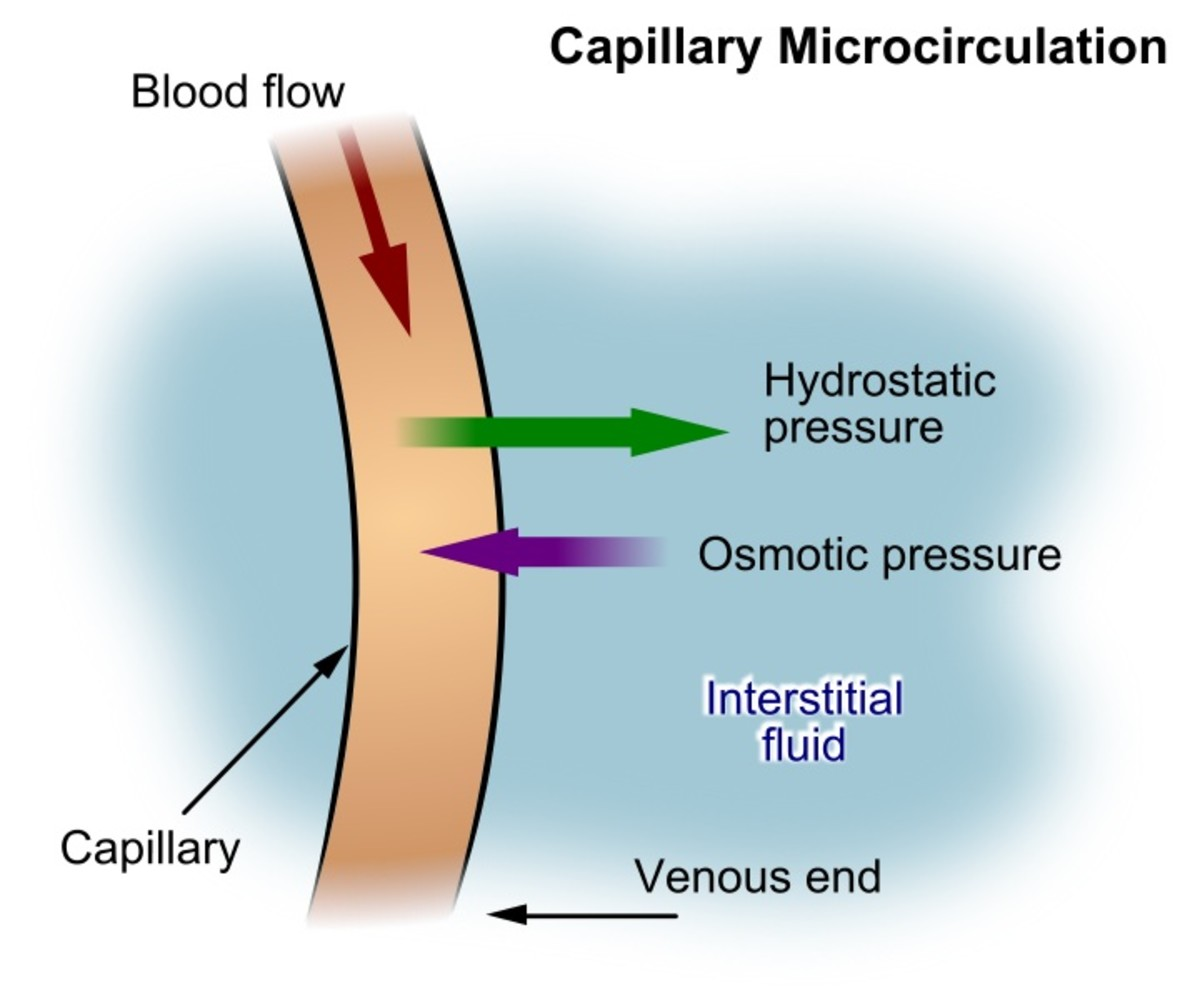 Substances such as oxygen and nutrients leave a capillary and enter the interstitial fluid around cells. Substances such as waste move in the opposite direction.