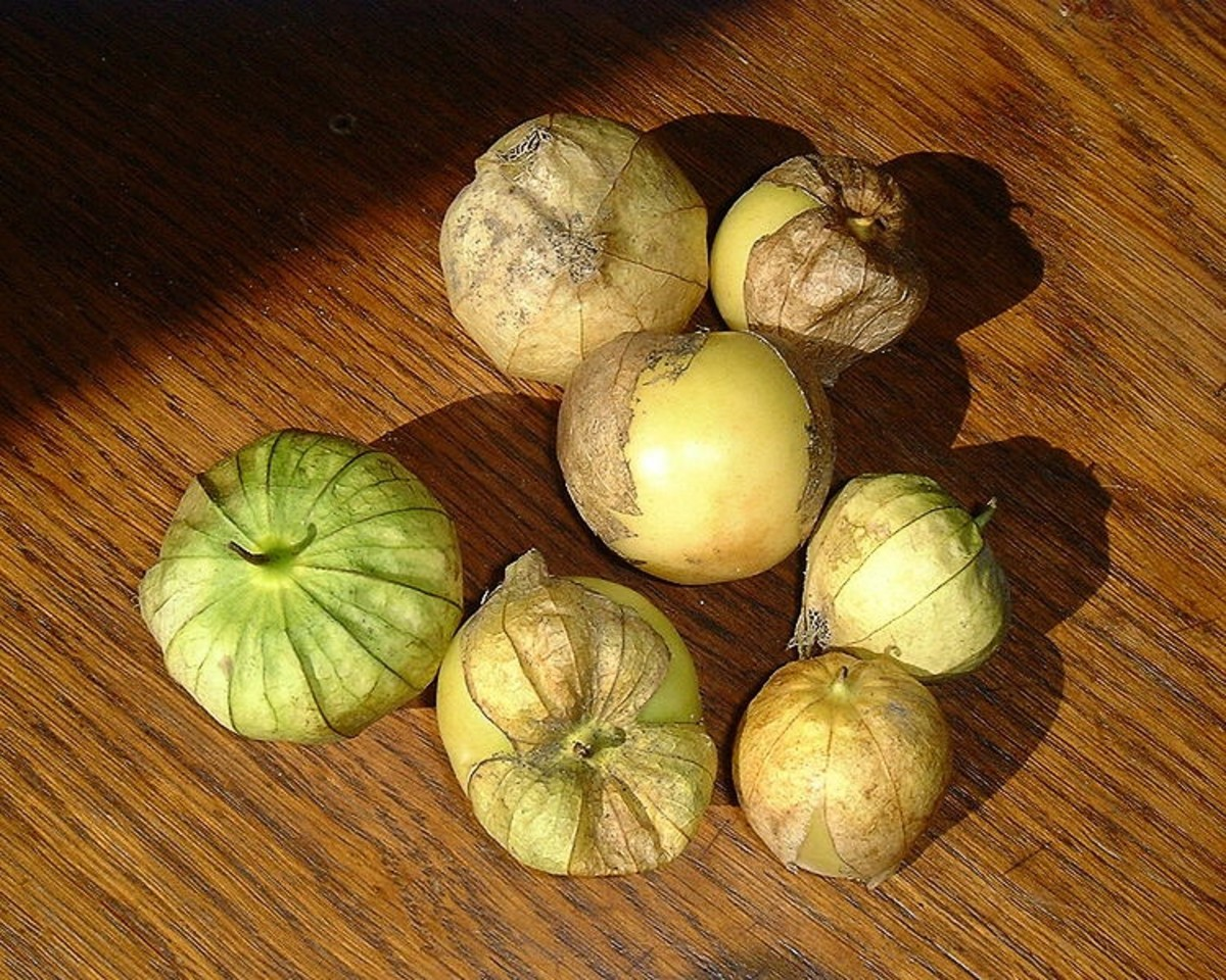 Tomatillos also belong to the nightshade family.