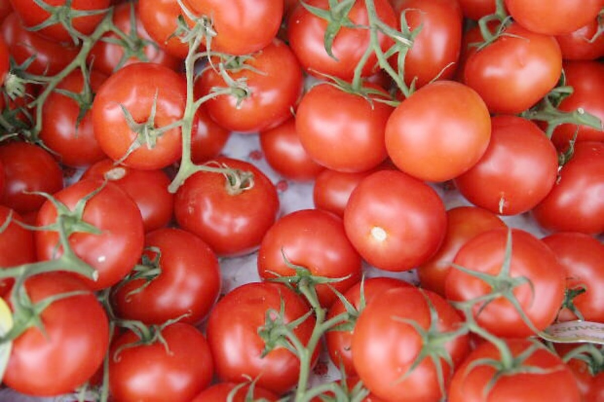 Tomatoes are a nutritious and delicious food. They belong to the nightshade family of plants.