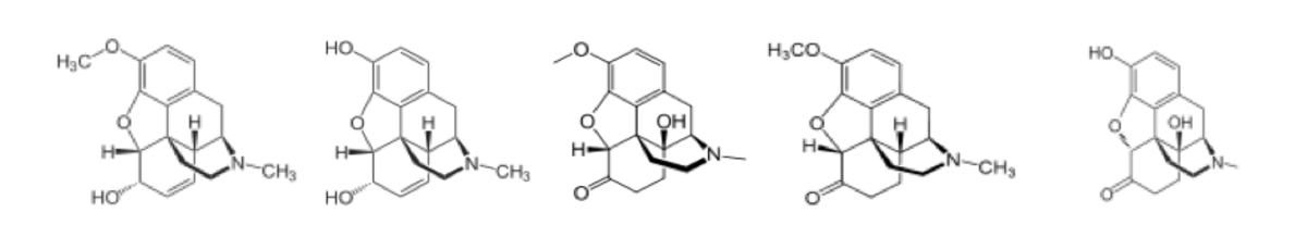 The very similar chemical structure of narcotics used to treat more severe sciatica cases: codeine, morphine, oxycodone, hydrocodone, oxymorphone