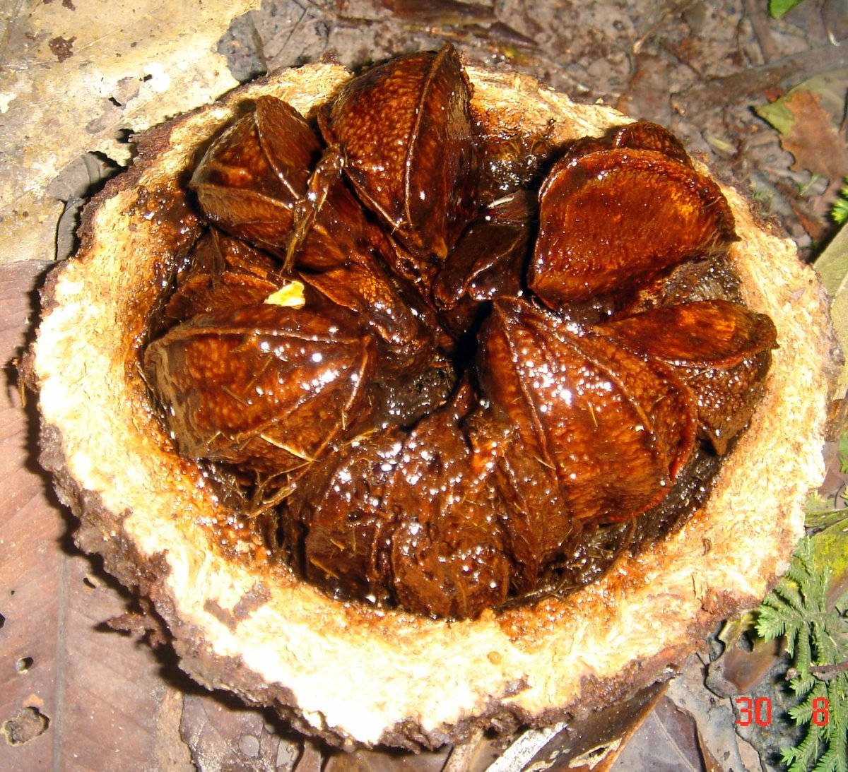 Brazil nuts are found in an area where selenium is plentiful, which is why Brazil nuts are a rich source of selenium.
