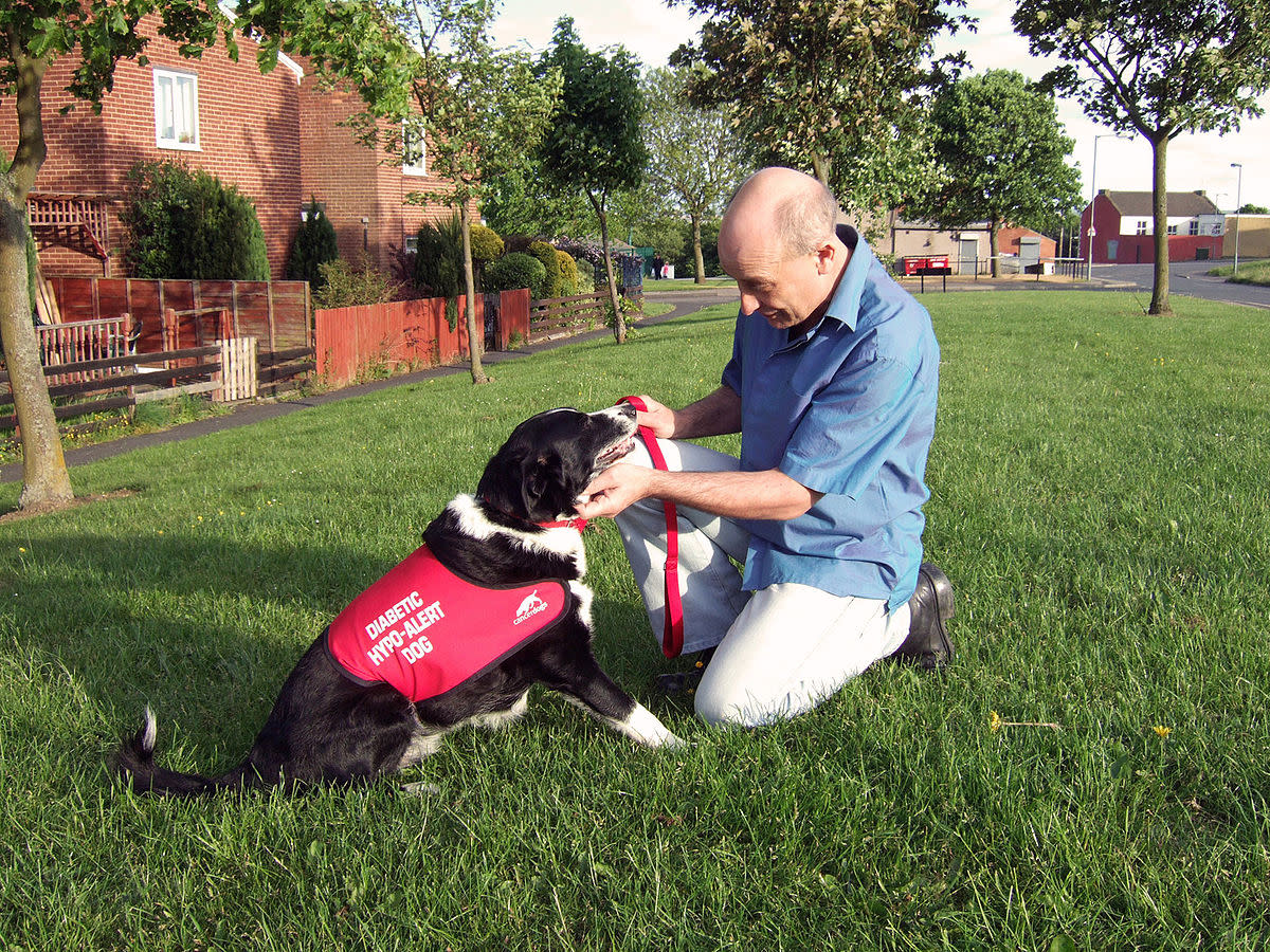 How Diabetes Alert Dogs Help Patients Manage Blood Sugar