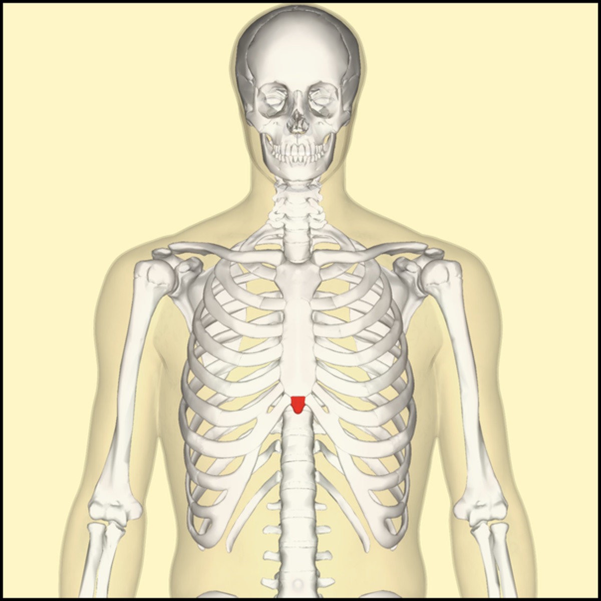 Xiphoid Process Pain: Symptoms, Causes and Diagnosis