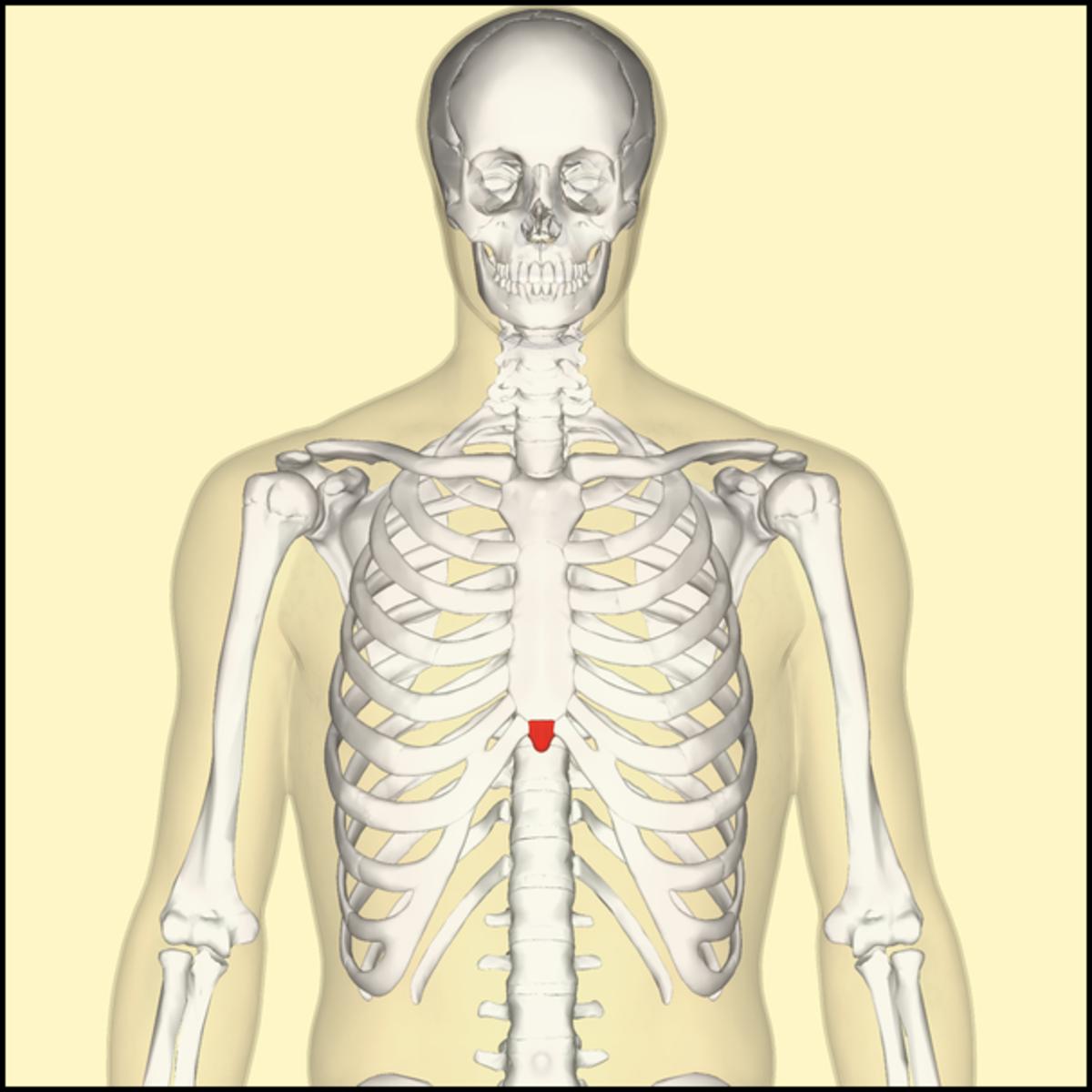 Xiphoid Process Pain: Causes, Symptoms, & Treatments