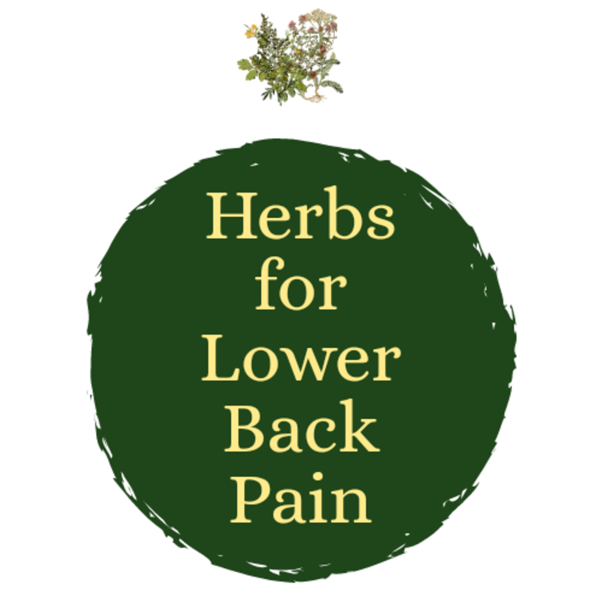 Best Herbs for Back Pain Relief