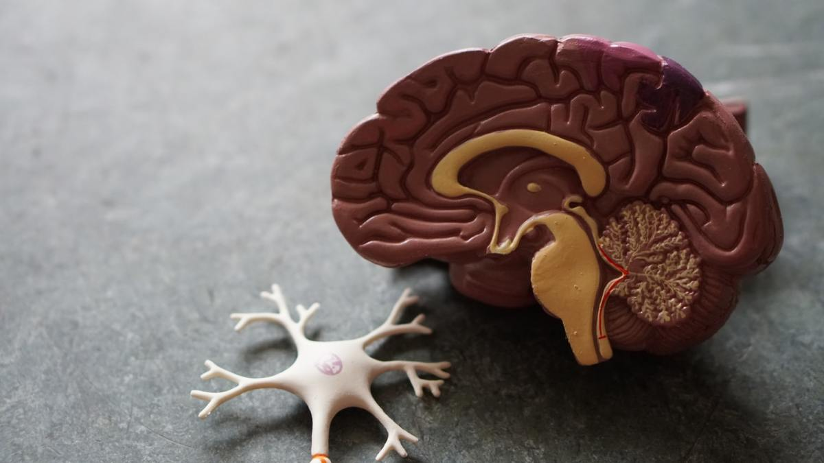 How Does Bipolar Disorder Impact the Brain, and Are There Remedies?