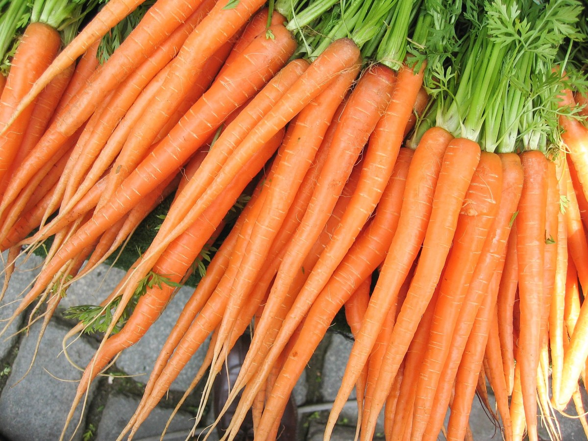 Eating lots of carrots can turn urine orange.