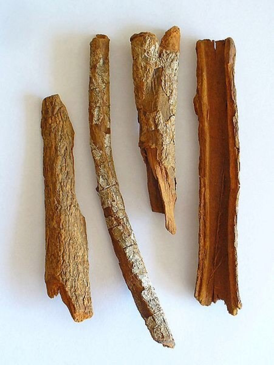 Like other trees and shrubs in the genus Cinchona, the bark of Cinchona officinalis contains quinine.