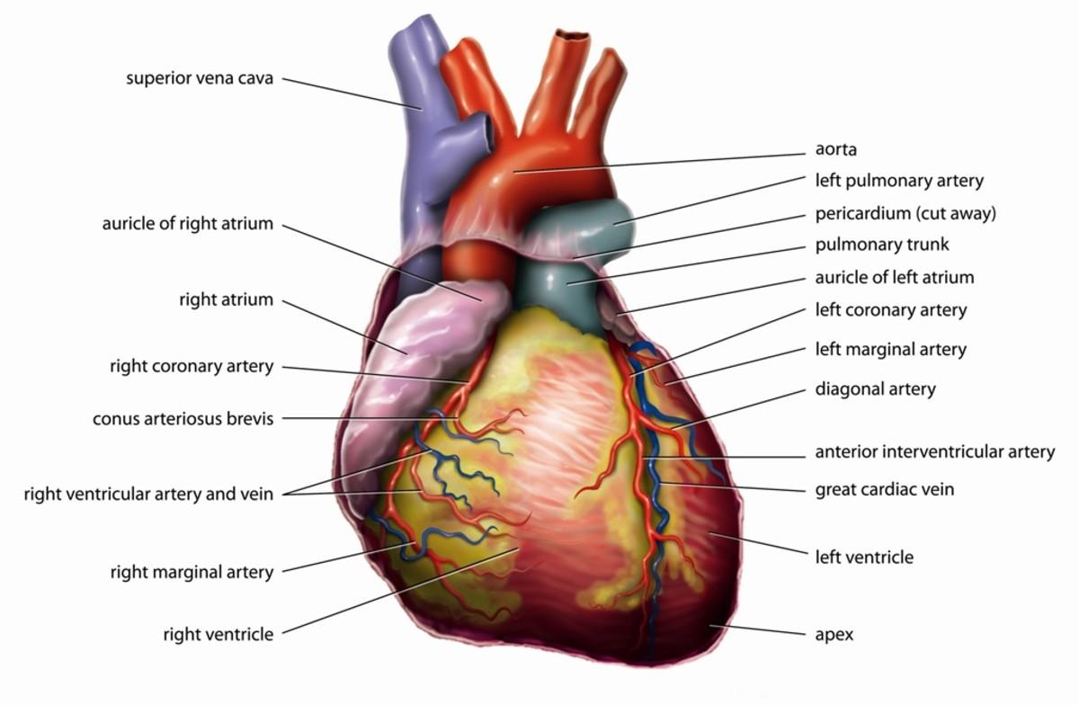 Aspirin may help to keep the heart healthy.