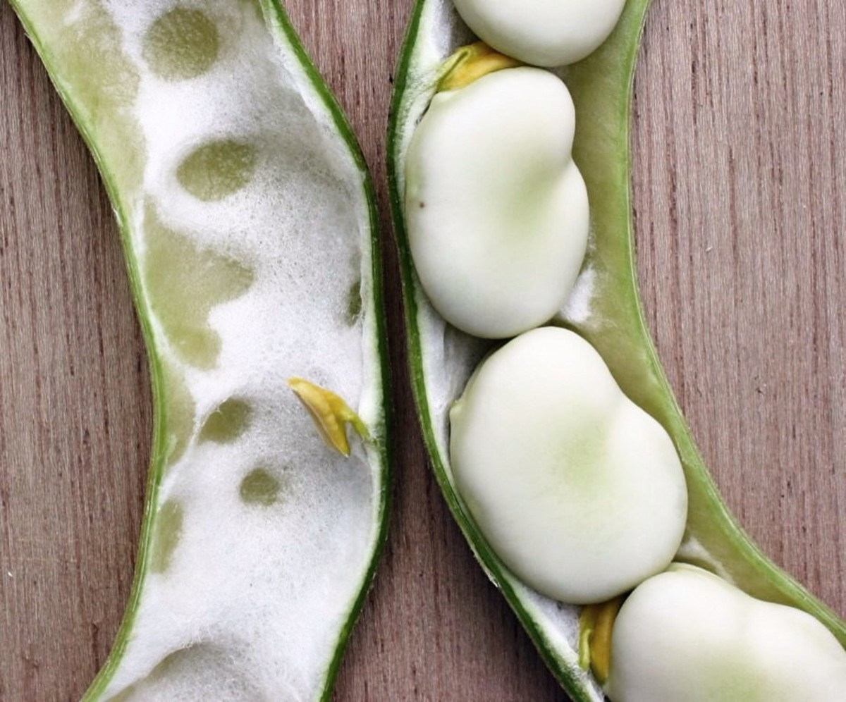 Fava beans or broad beans also contain L-dopa.