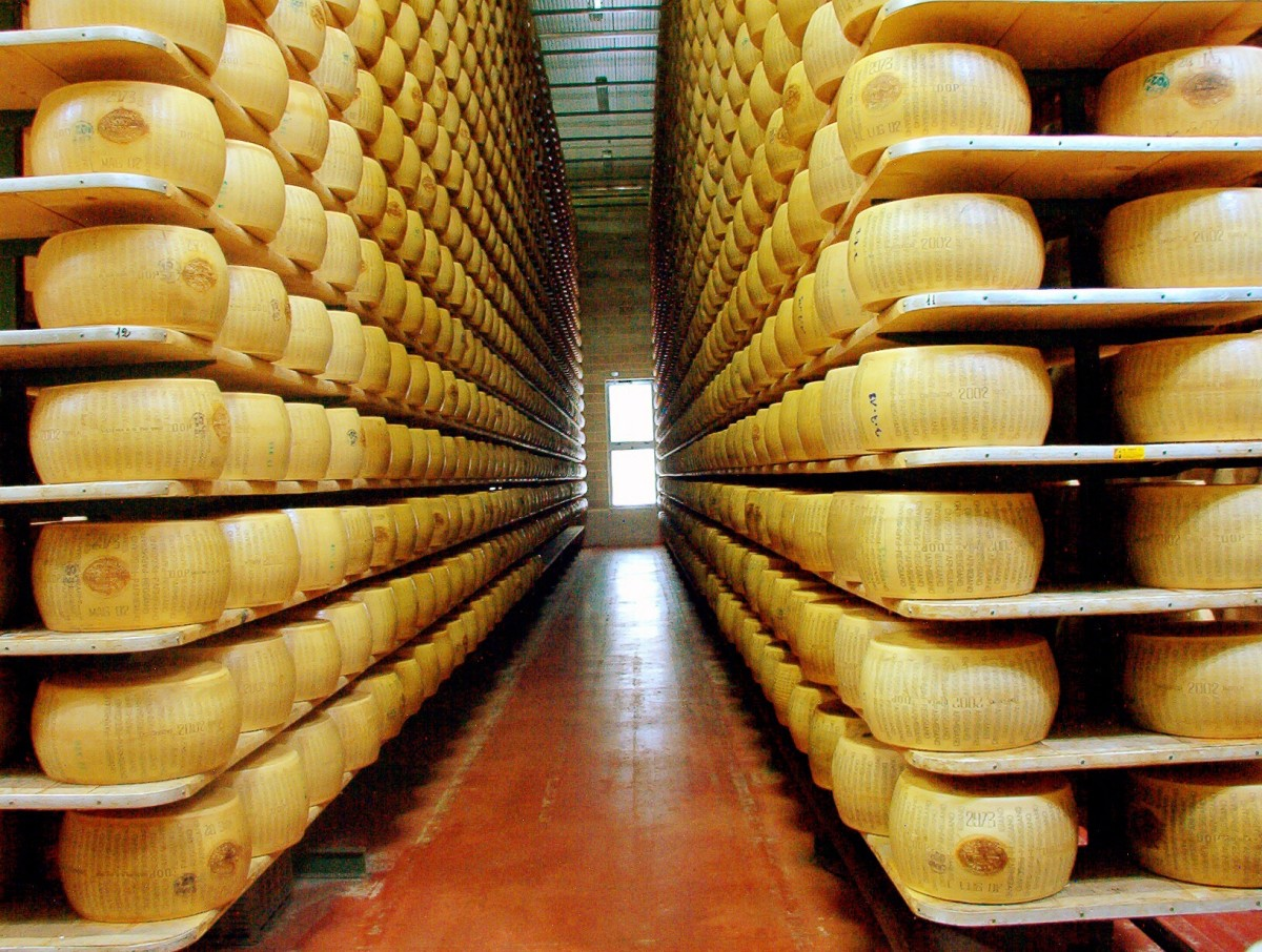 Wheels of parmesan cheese maturing in a factory