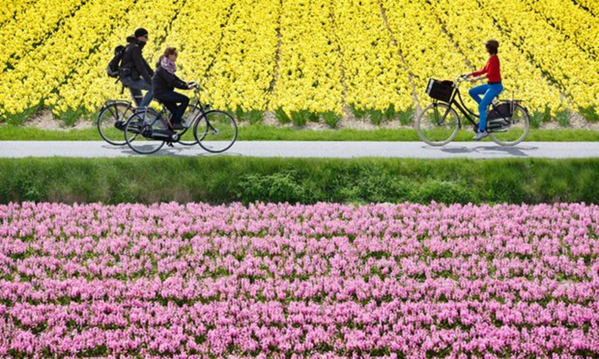 Cycling is the most common form of transport in Holland.