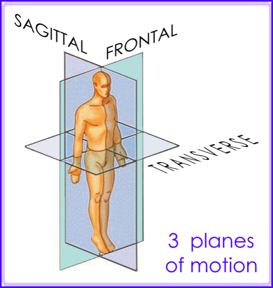 "sagittal=like head moves saying ""yes"", transverse=""no"", frontal=""maybe"" (/ \ drop ear towards shoulder)."