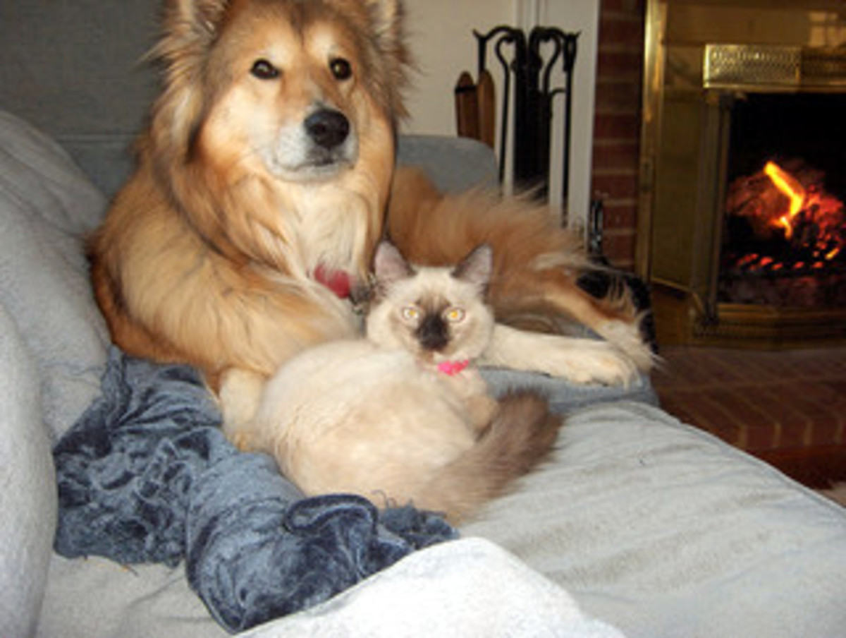 Pet such as dog or cat can be a good therapy for elderly people who are down with depression