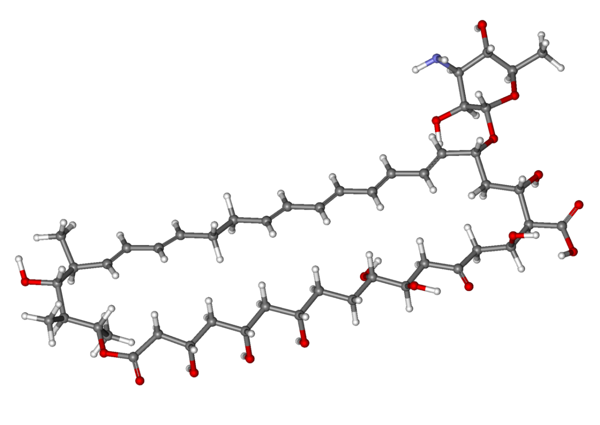 In this ball and stick model of a nystatin molecule, the balls represent atoms and the sticks represent chemical bonds.