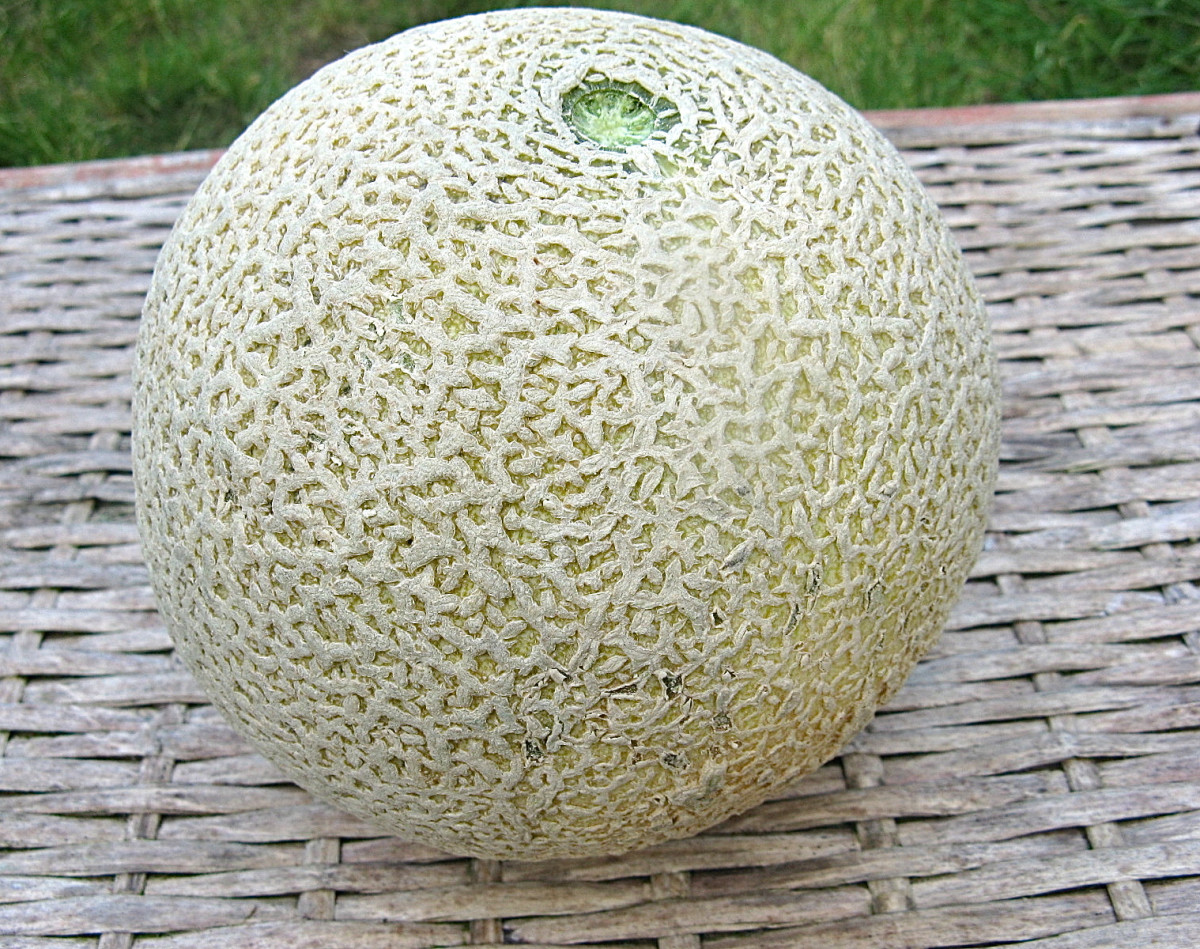 Cantaloupes may have potentially dangerous  bacteria on their surface.