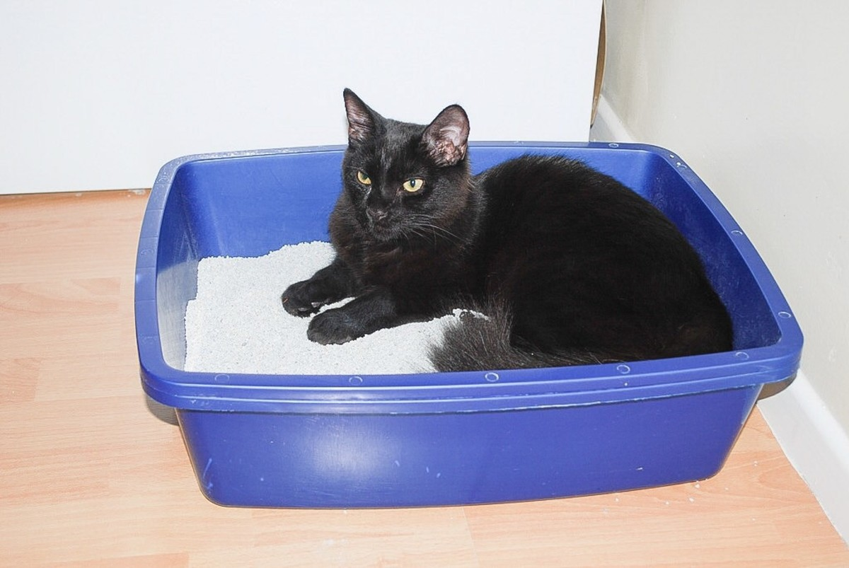 This cat likes to sleep in the litter box.