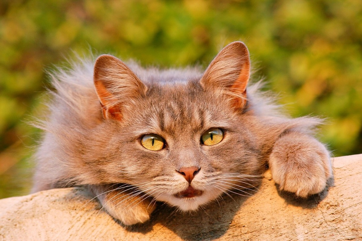 Cats can be wonderful pets. The fear of toxoplasmosis isn't a reason to avoid them. Some people may need to take simple precautions when caring for their cat, however.