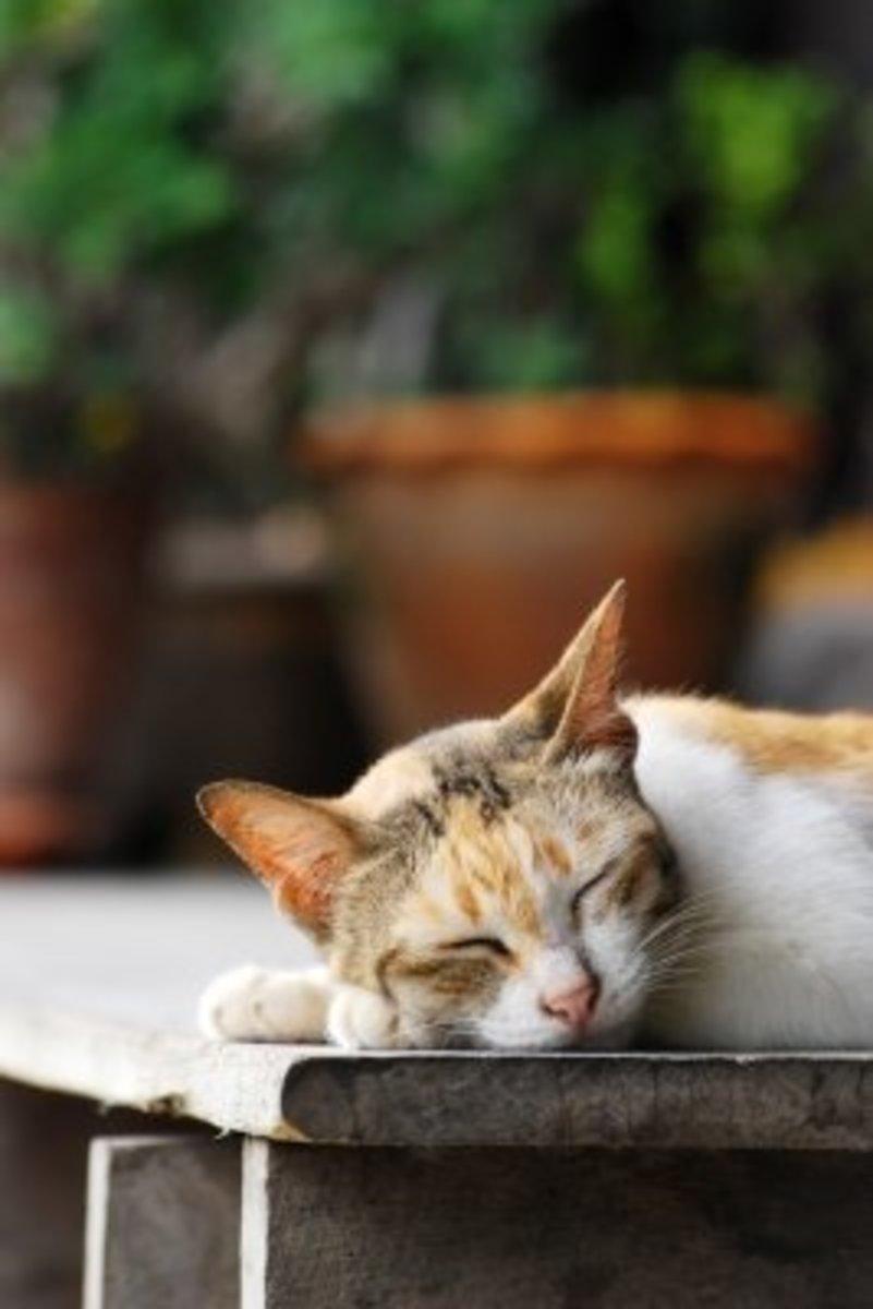 Cat nap?