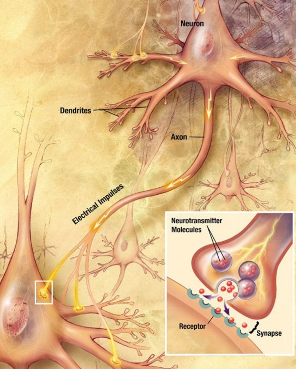 A synapse and neurotransmission