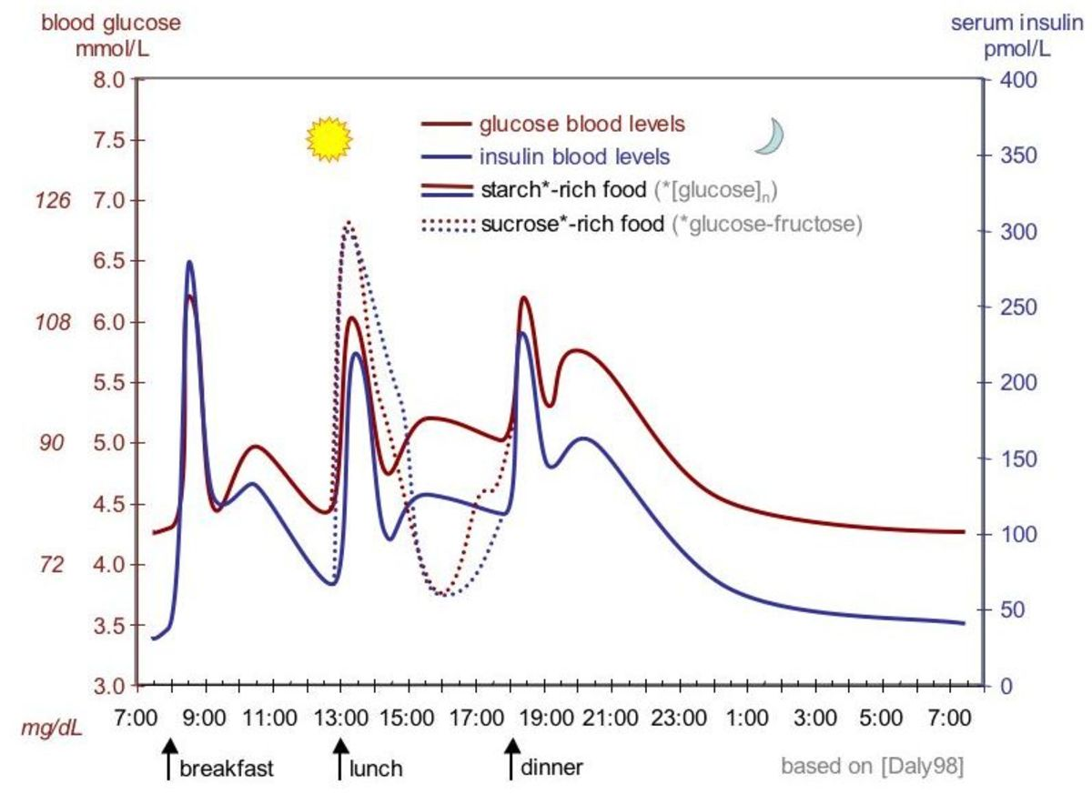 Profile of normal blood sugar levels throughout the day