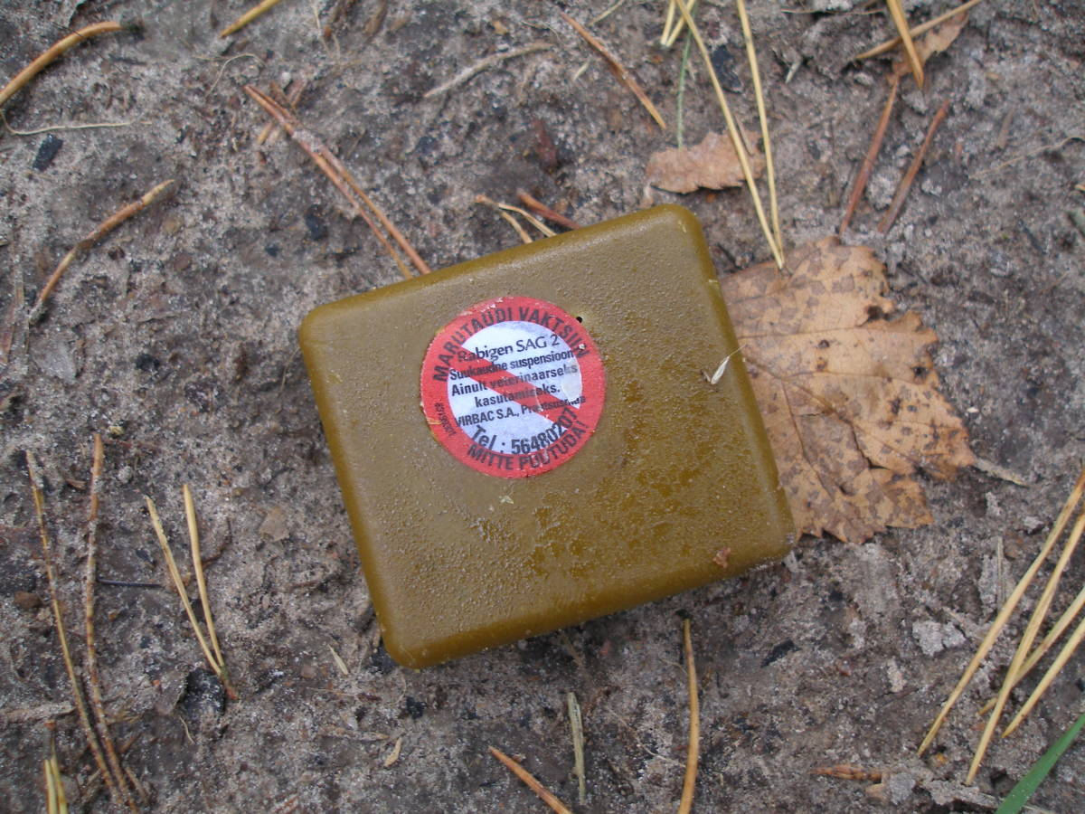 Oral rabies vaccine is often dropped into wildlife areas. This bait is located in a wildlife preserve in Estonia.