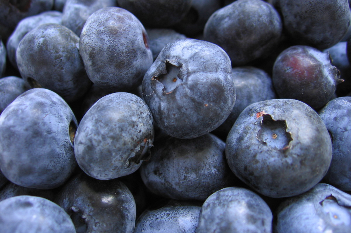 Foods that can give false melena – Blueberries.