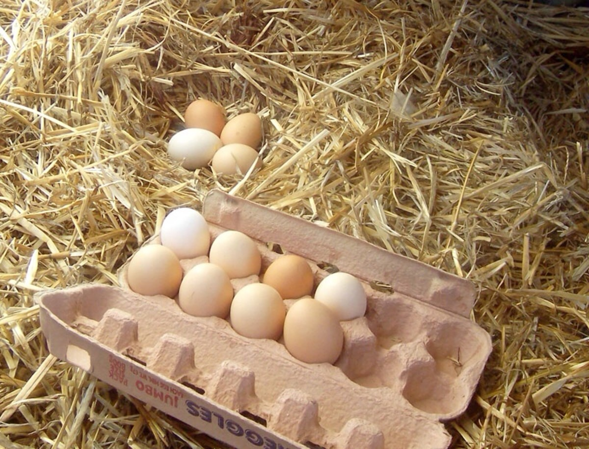 Eggs are a nutritious food and are sometimes recommended as part of a healthy diet, but they are allergenic for some people.