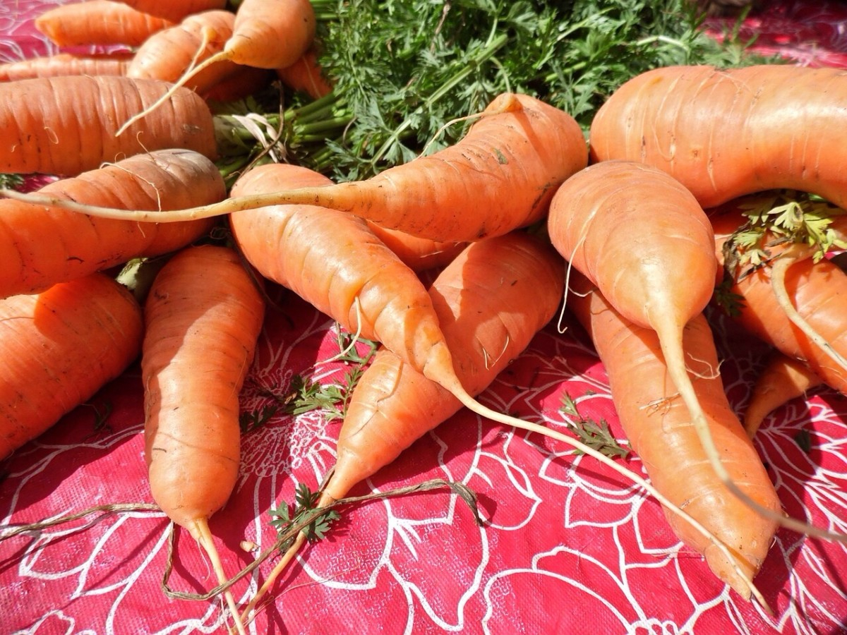 Carrots are an excellent source of beta-carotene and a good source of soluble fiber.