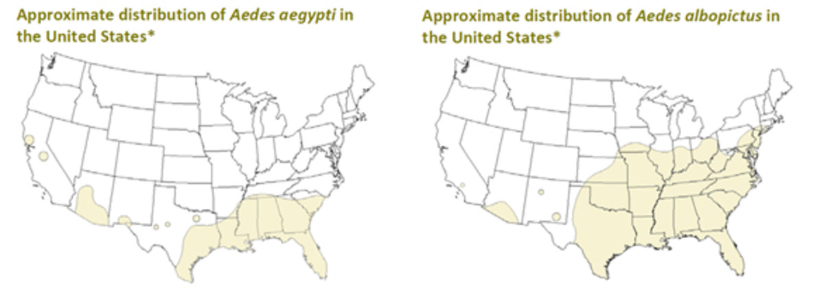 Maps showing where the disease carrying mosquitos, Aedes aegypti and Aedes albopictus, have been found in the United States.