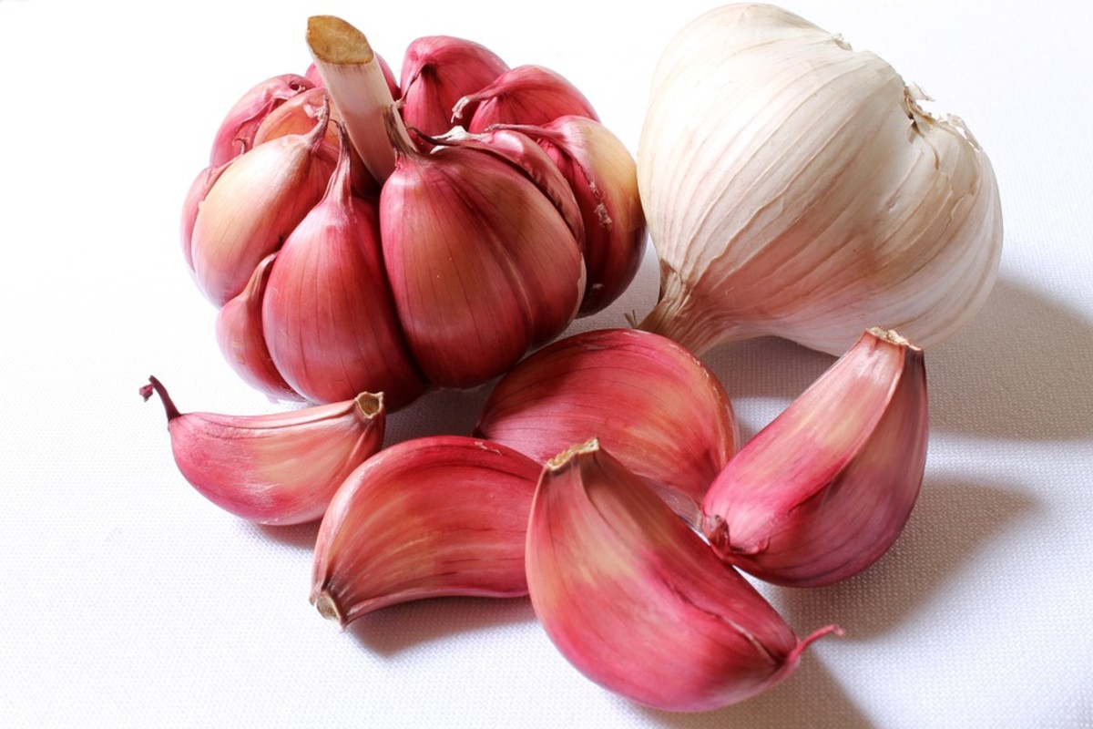 how garlic can improve oral health
