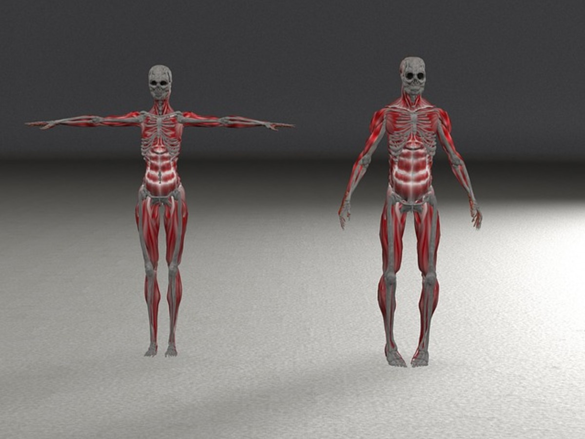Every human has unique characteristics and 3D models allow doctors pre-surgical practice on the model, before they operate on the patient.