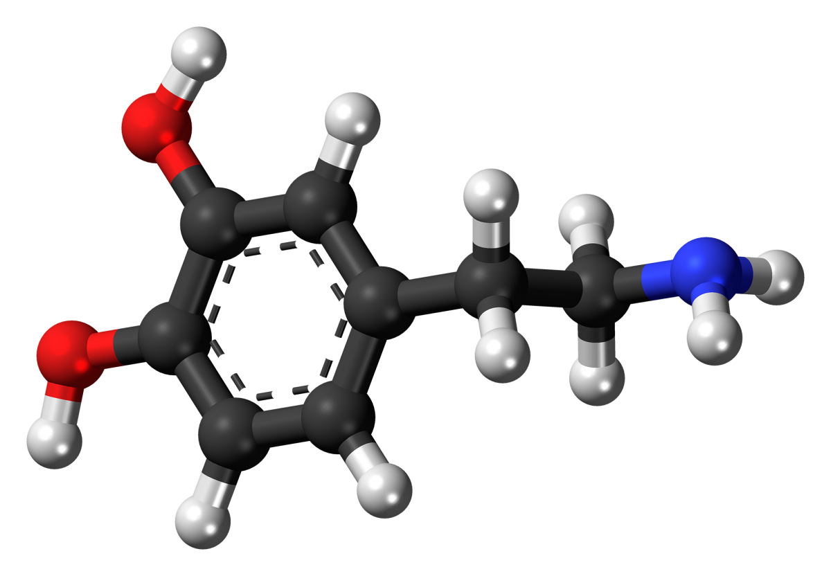 The chemical structure of dopamine. Too much, or too little dopamine in the brain will result in depressive or manic conditions.
