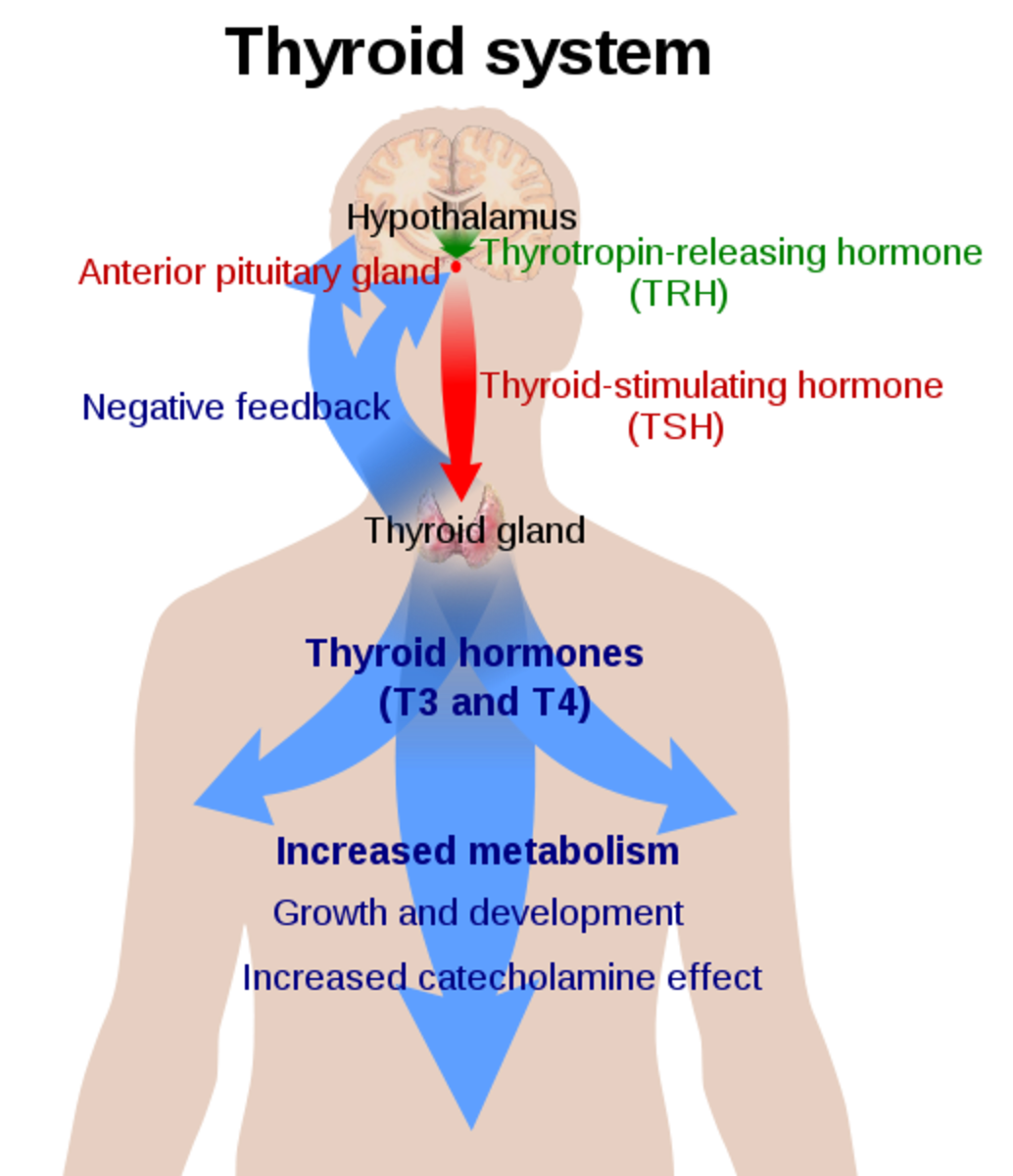 Thyromegaly - Symptoms, Causes, Types, Treatment, Medication, Prevention