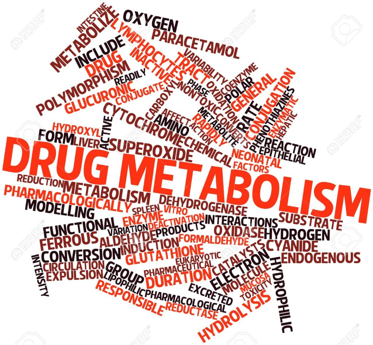 alcohols-effect-on-drug-metabolism-in-active-women-and-sedentary-men
