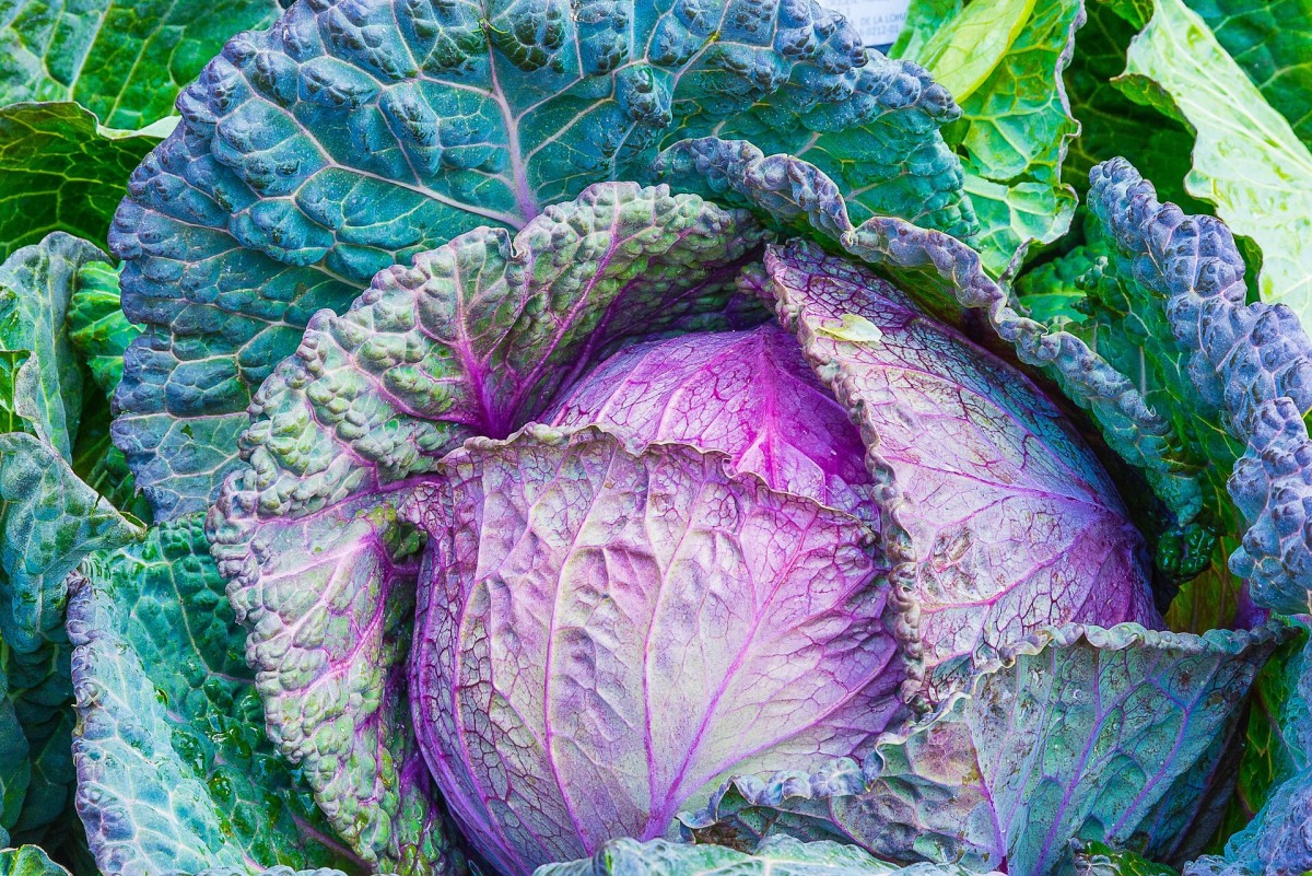 Cabbages are cruciferous vegetables.