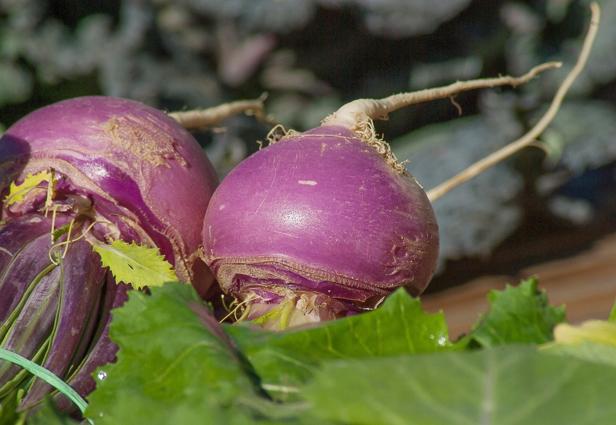 Turnips are a cruciferous vegetable.